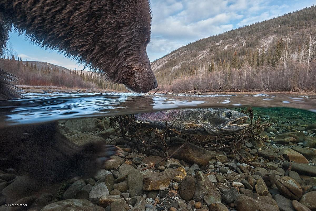 Wildlifephotographer01