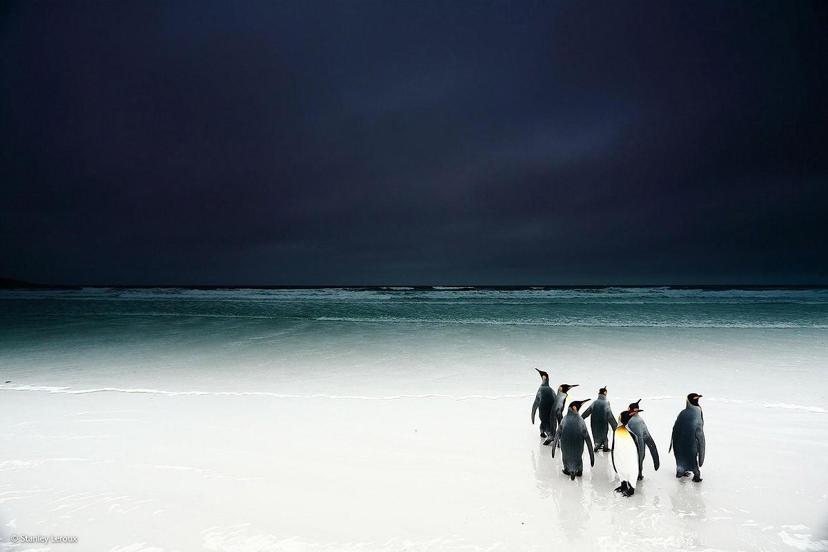 Wildlifephotographer06