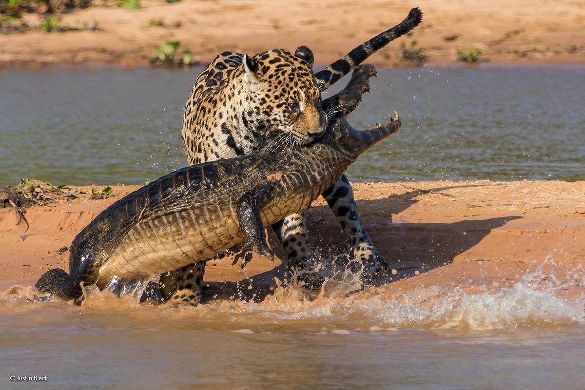 Wildlifephotographer09