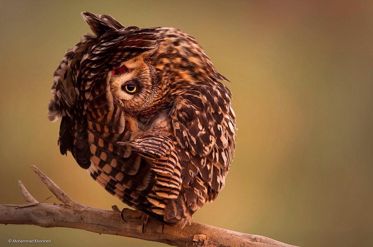 Wildlifephotographer14