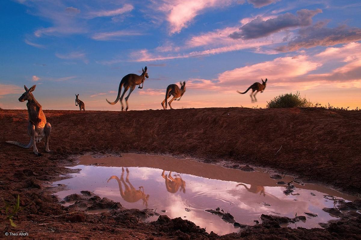 Wildlifephotographer19