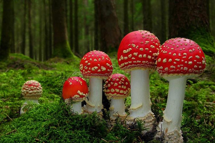 عکاسی ماکرو ا ز قارچها توسط مارتین فیستر