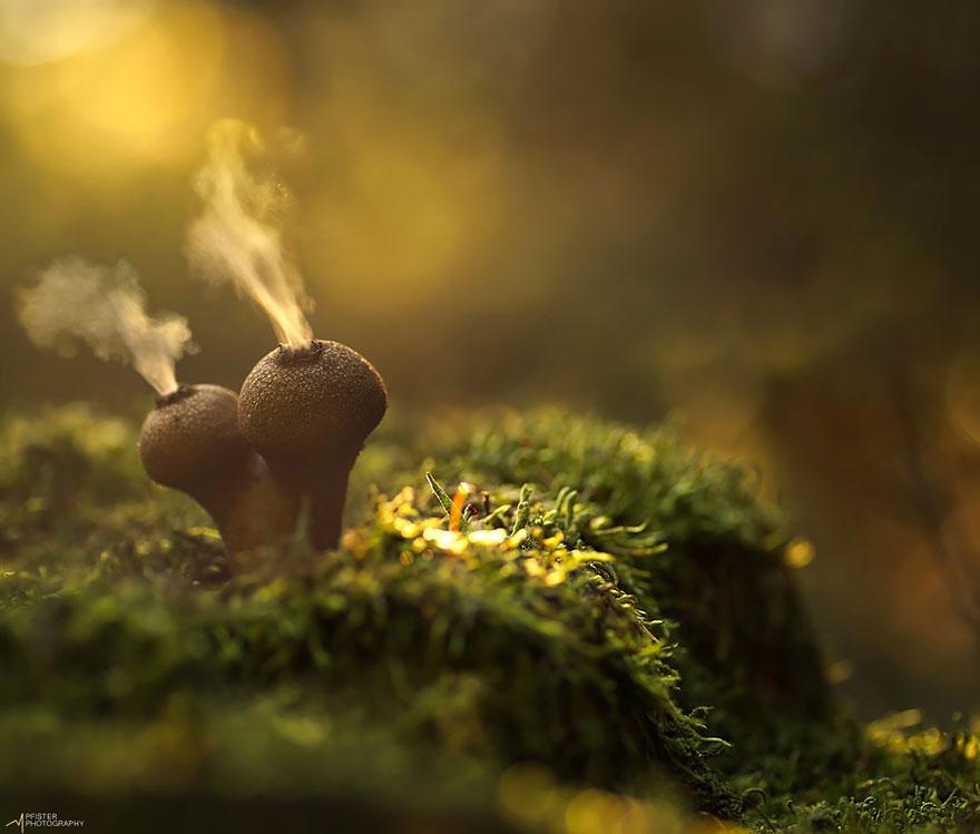 عکاسی ماکرو از قارچها توسط مارتین فیستر