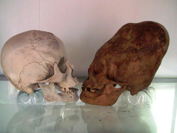 ParacasSkull