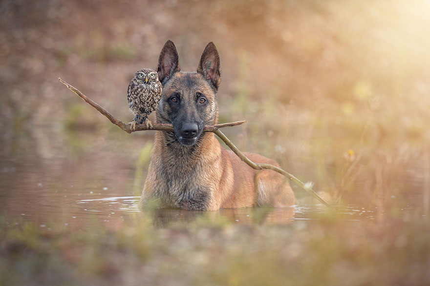 dog and owl friendship (1)