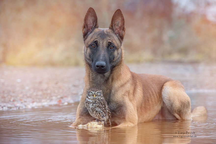 dog and owl friendship (10)