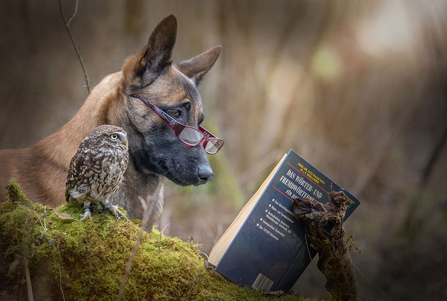 dog and owl friendship (11)