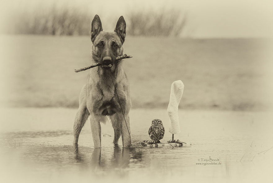 dog and owl friendship (12)