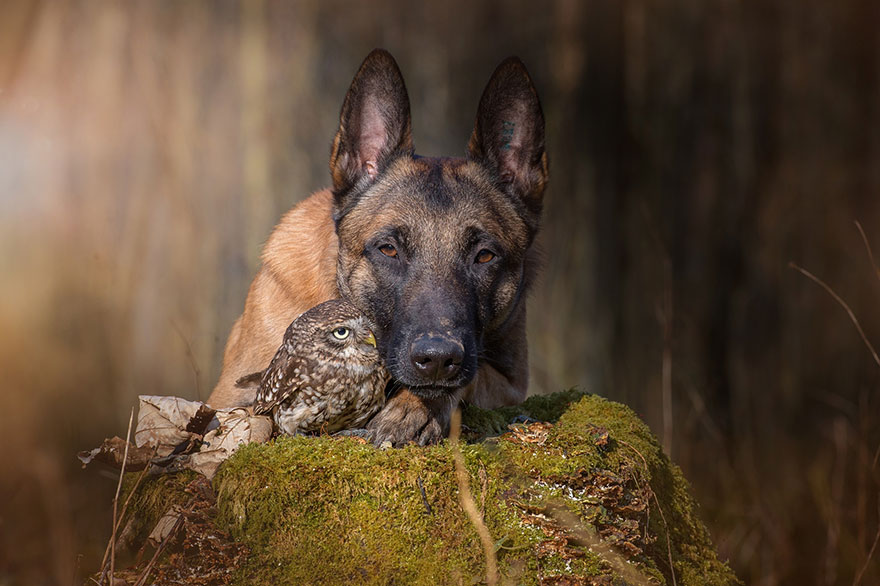 dog and owl friendship (13)