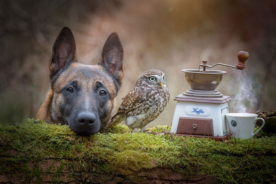 dog and owl friendship (6)