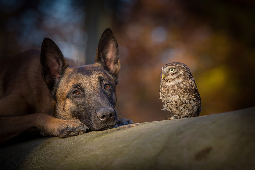 dog and owl friendship (9)