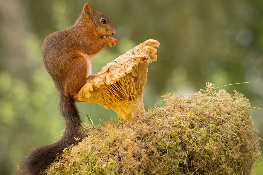 cute-squirrel-photography-geert-weggen-18