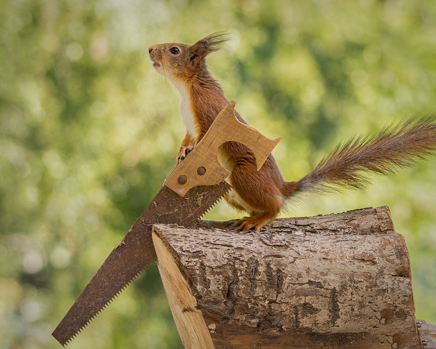 cute-squirrel-photography-geert-weggen-8
