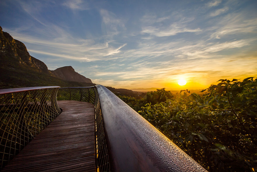 tree-canopy-walkway-path-kirstenbosch-national-botanical-garden-12