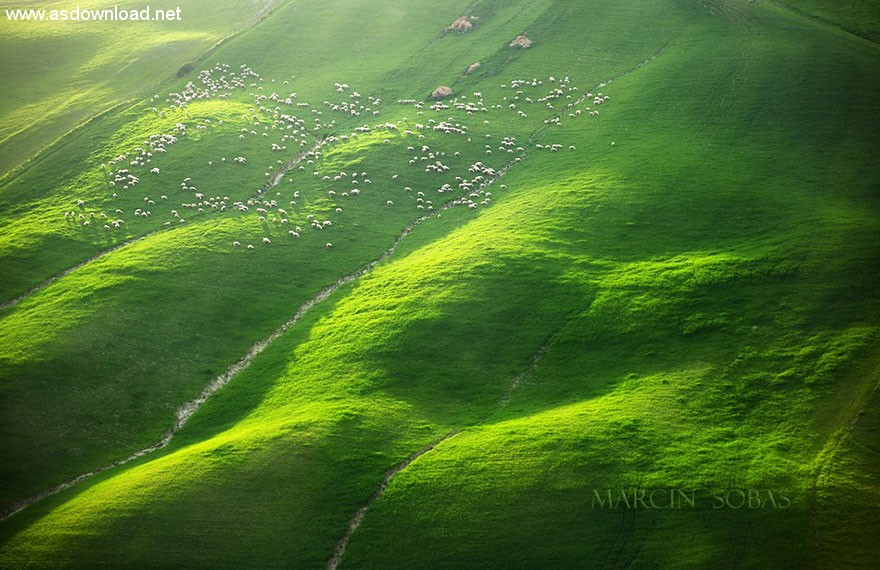 field-landscape-photography-only-sheep-marcin-sobas-tuscan-4