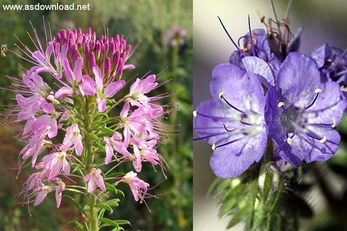 گلهای علف عقرب و گیاه زنبور
