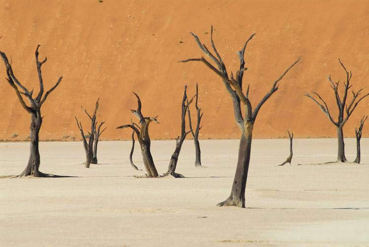 Deadvlei در پارک Namib-Naukluft