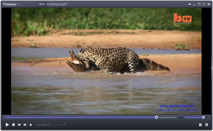Crocodile hunt by leopard