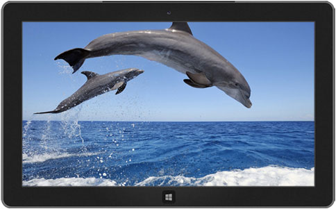 Dolphins theme windows 8