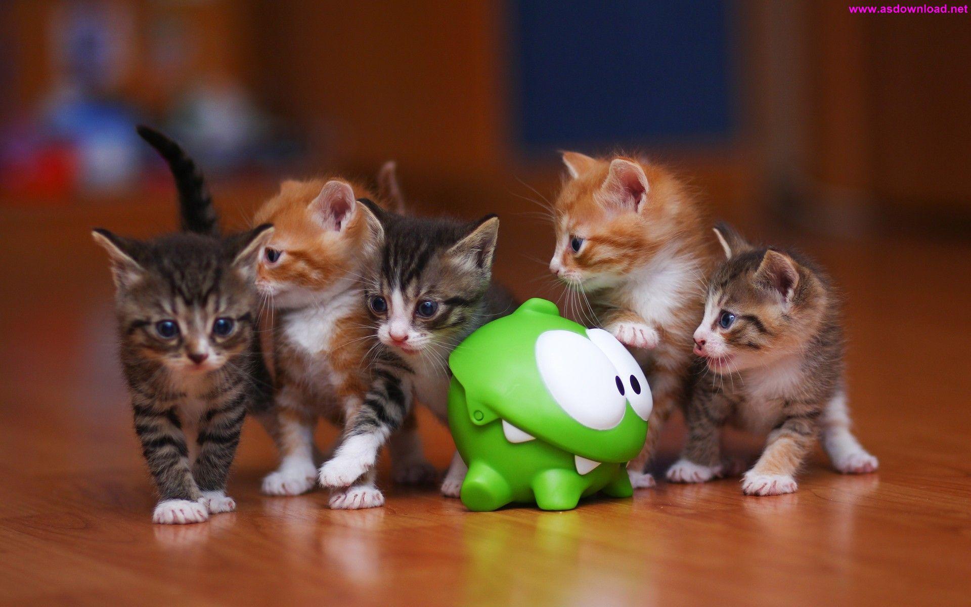 Om Nom Kittens Cat Toy Wallpaper دانلود والپیپر جدید 2015